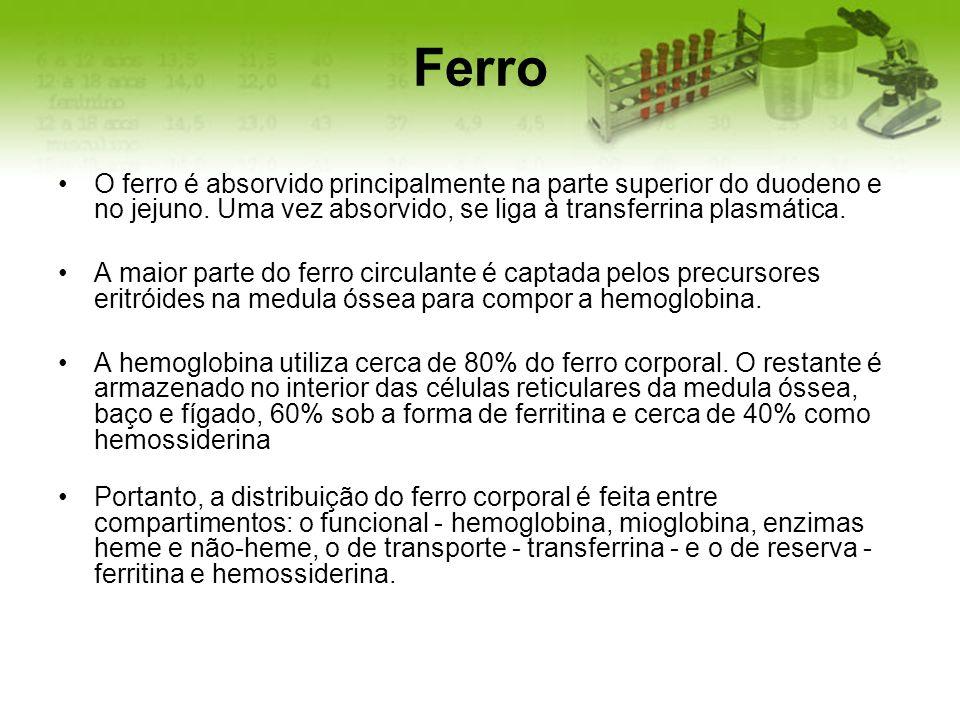 Ferro O ferro é absorvido principalmente na parte superior do duodeno e no jejuno. Uma vez absorvido, se liga à transferrina plasmática.