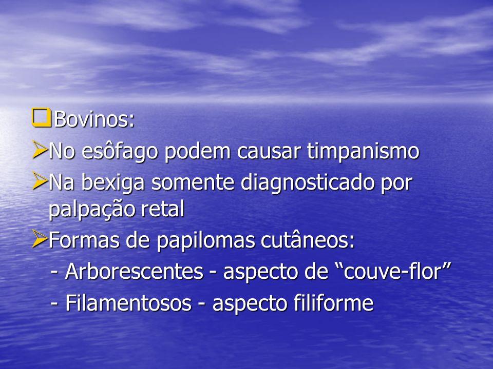 Bovinos: No esôfago podem causar timpanismo. Na bexiga somente diagnosticado por palpação retal. Formas de papilomas cutâneos: