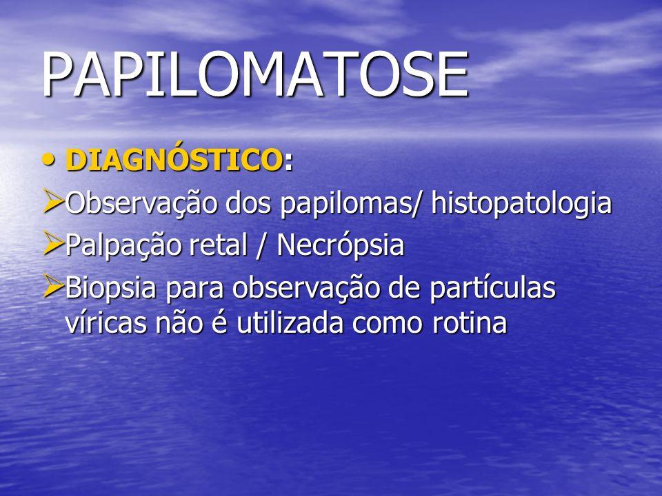 PAPILOMATOSE DIAGNÓSTICO: Observação dos papilomas/ histopatologia
