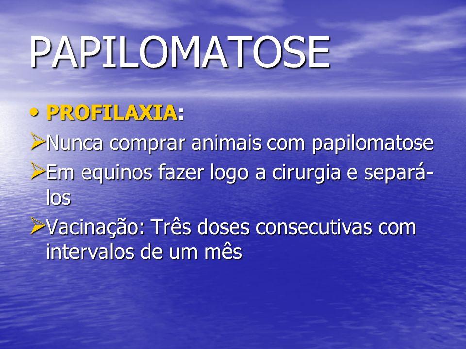 PAPILOMATOSE PROFILAXIA: Nunca comprar animais com papilomatose