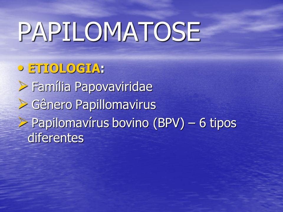 PAPILOMATOSE ETIOLOGIA: Família Papovaviridae Gênero Papillomavirus