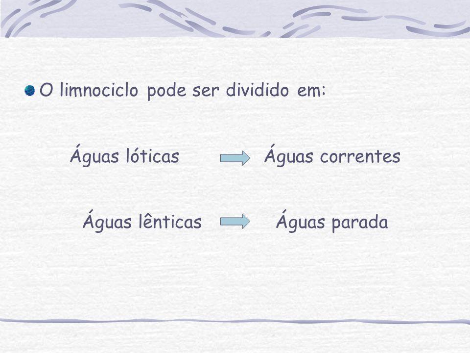 Águas lóticas Águas correntes