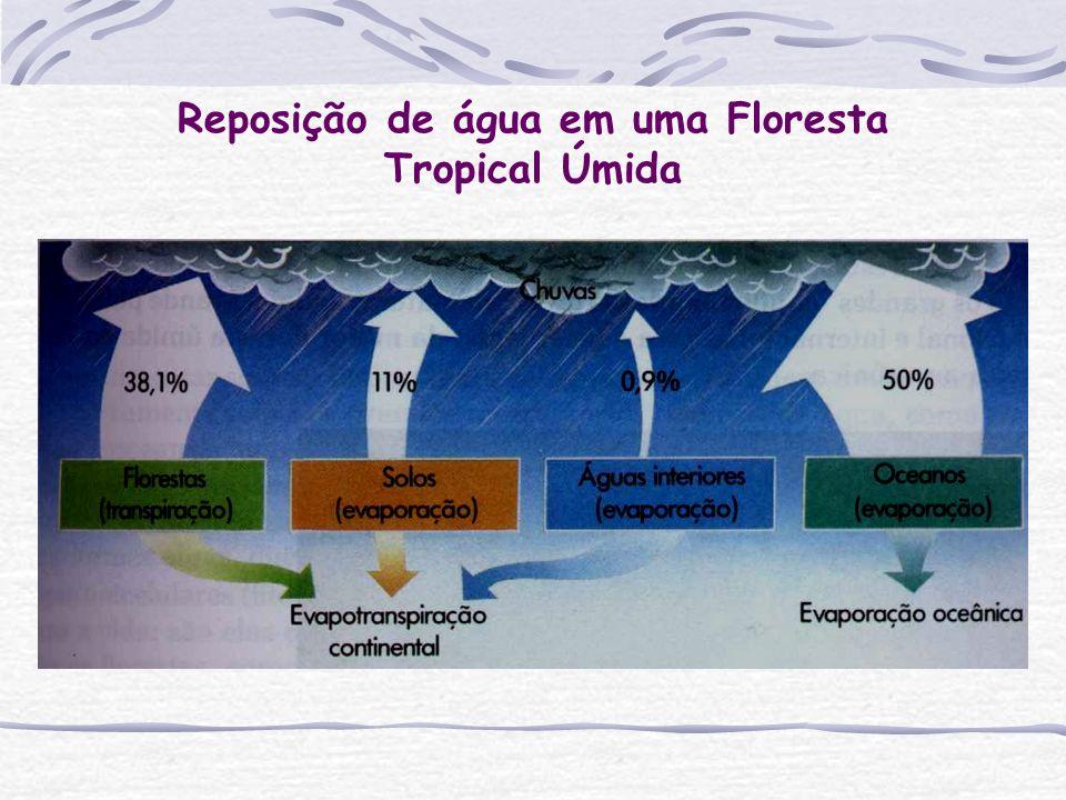 Reposição de água em uma Floresta Tropical Úmida