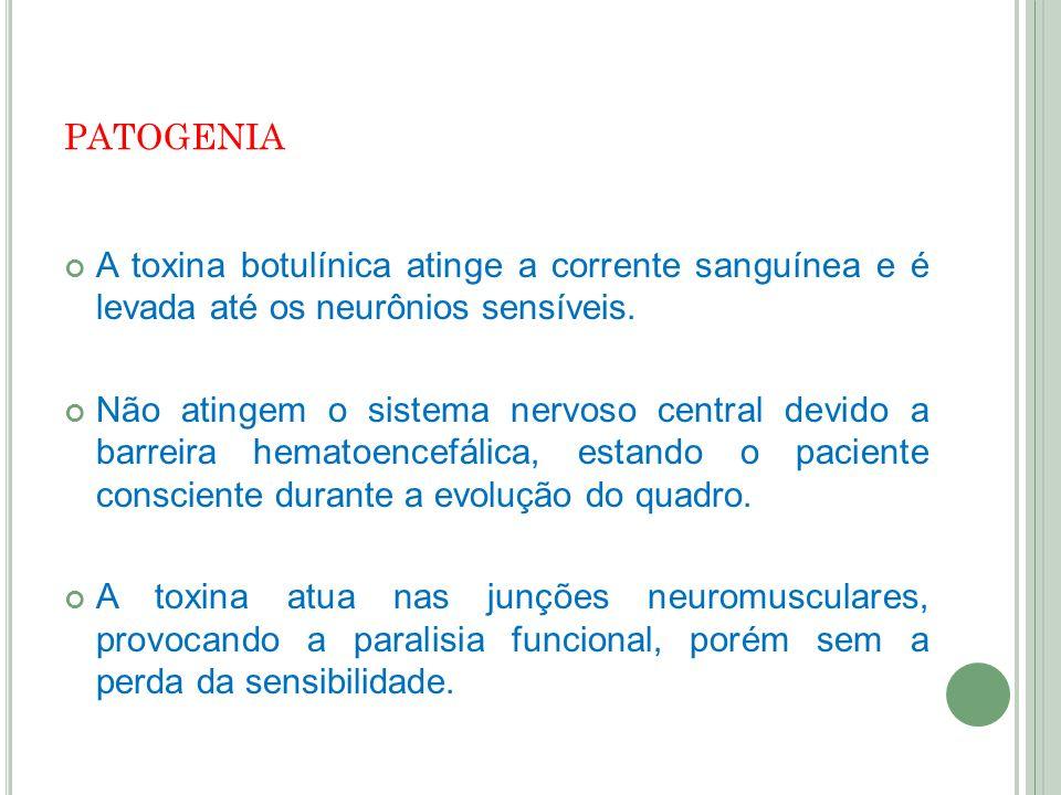 patogenia A toxina botulínica atinge a corrente sanguínea e é levada até os neurônios sensíveis.
