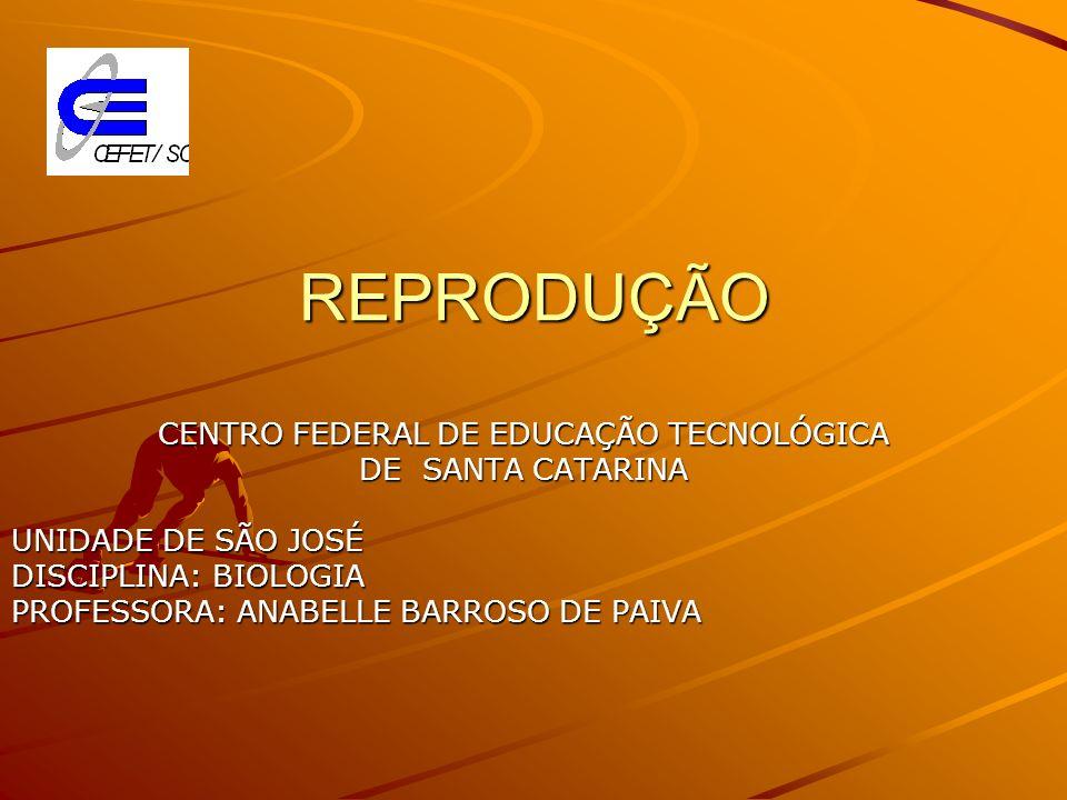 CENTRO FEDERAL DE EDUCAÇÃO TECNOLÓGICA