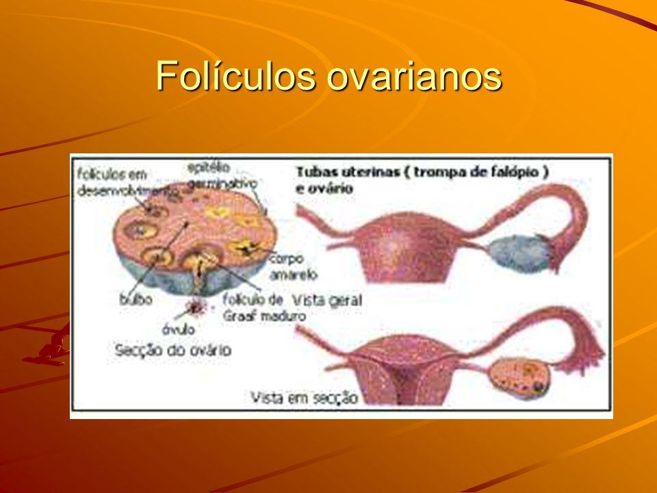 Folículos ovarianos