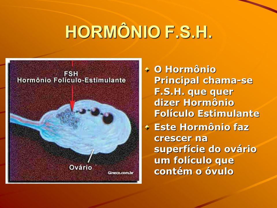 HORMÔNIO F.S.H. O Hormônio Principal chama-se F.S.H. que quer dizer Hormônio Folículo Estimulante.