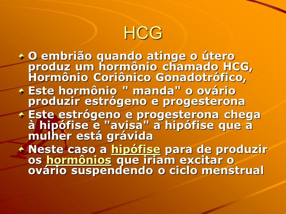 HCG O embrião quando atinge o útero produz um hormônio chamado HCG, Hormônio Coriônico Gonadotrófico,