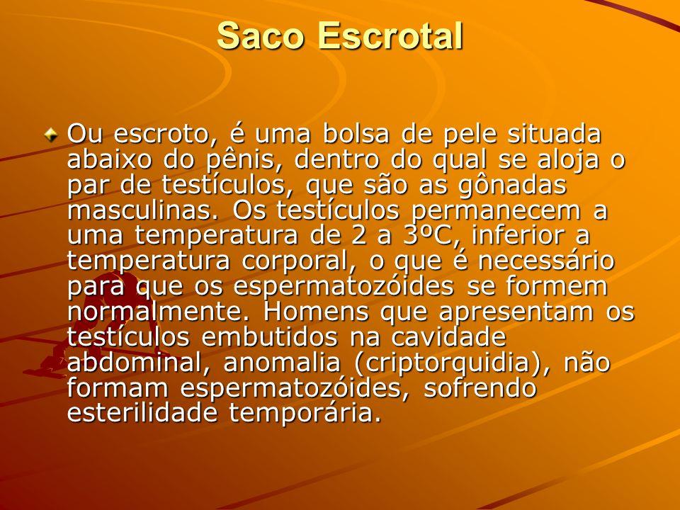Saco Escrotal