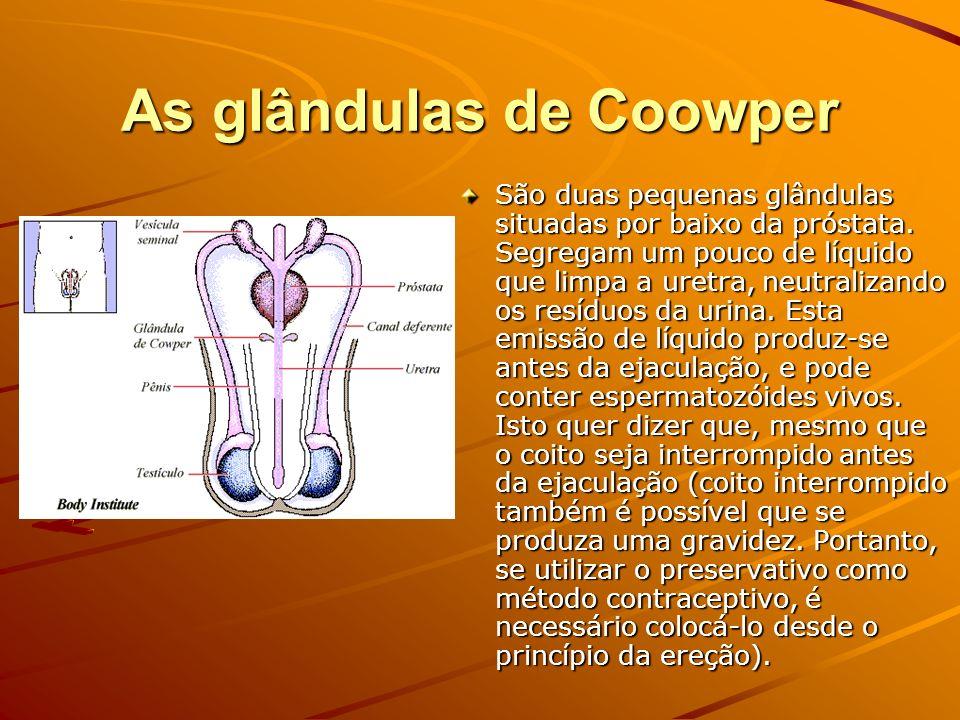 As glândulas de Coowper