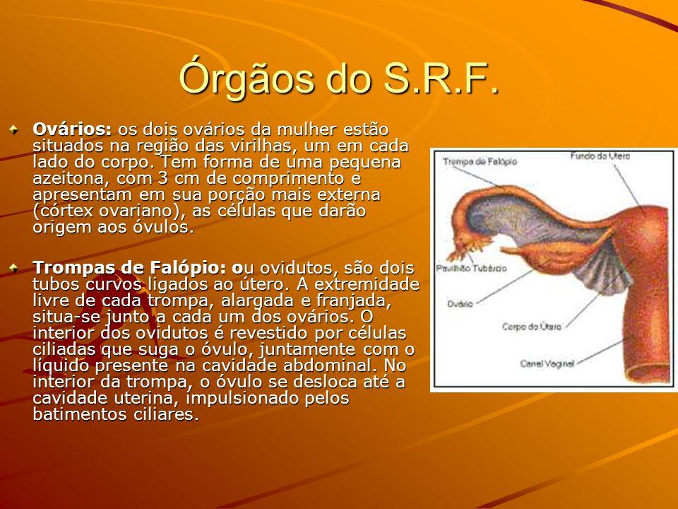Órgãos do S.R.F.