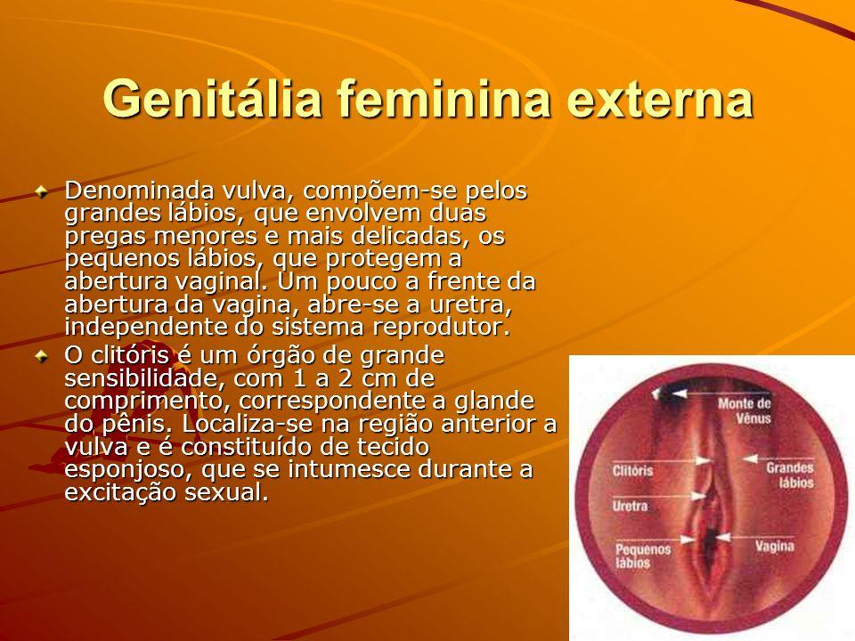 Genitália feminina externa