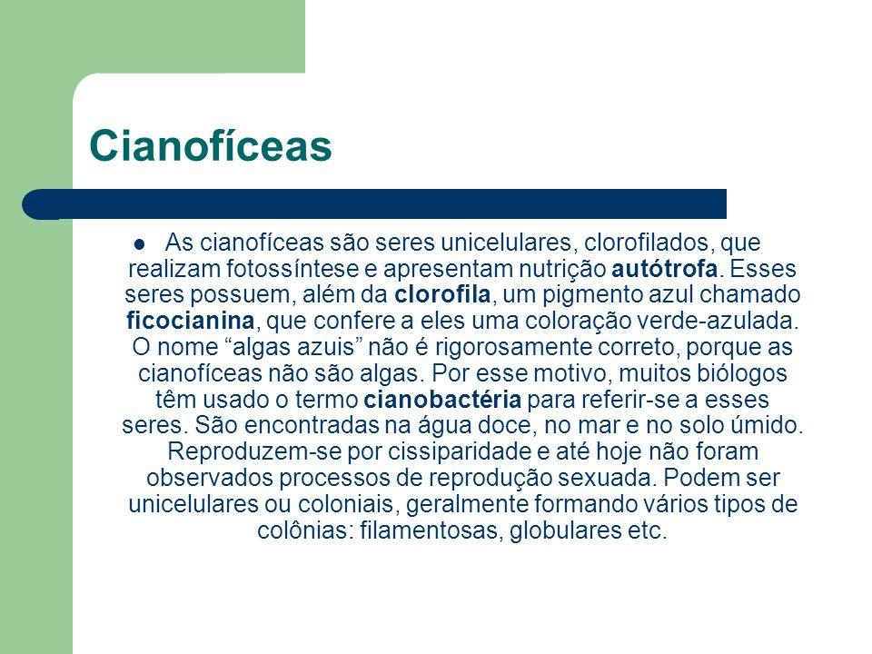 Cianofíceas