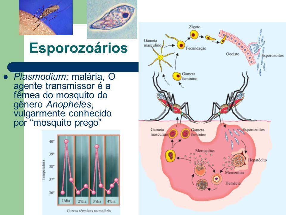 EsporozoáriosPlasmodium: malária, O agente transmissor é a fêmea do mosquito do gênero Anopheles, vulgarmente conhecido por mosquito prego