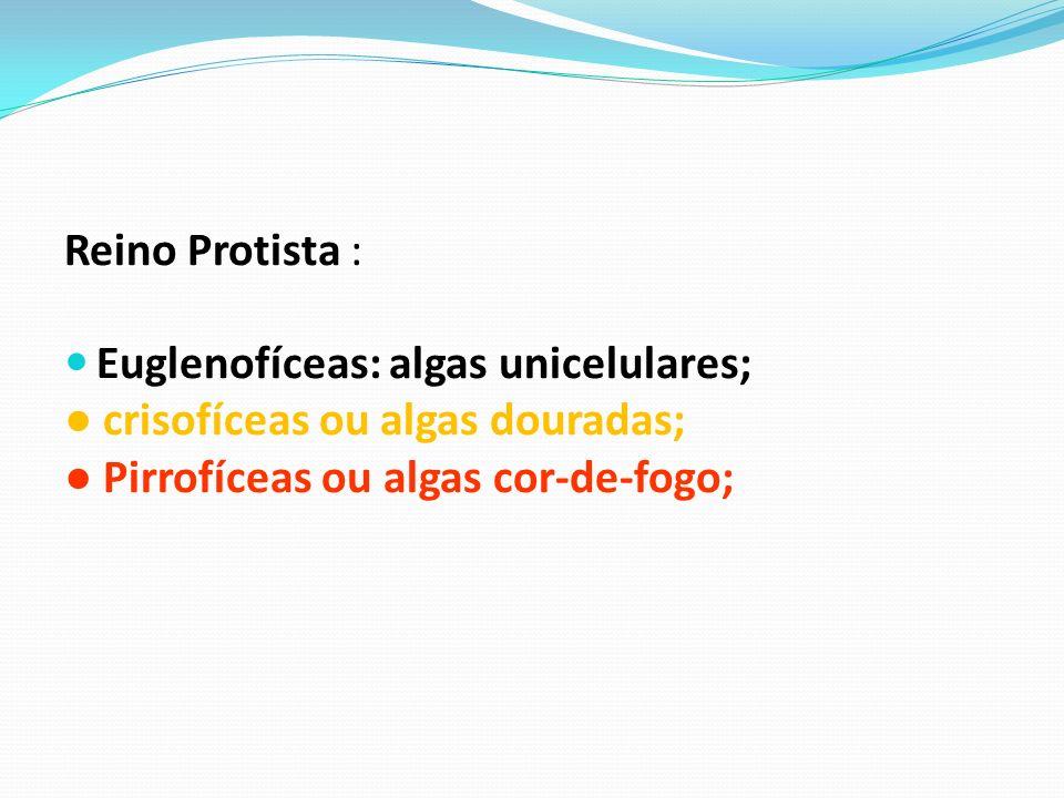 Reino Protista : Euglenofíceas: algas unicelulares; ● crisofíceas ou algas douradas; ● Pirrofíceas ou algas cor-de-fogo;