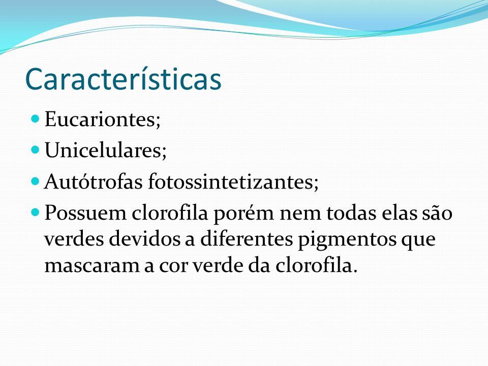 Características Eucariontes; Unicelulares;