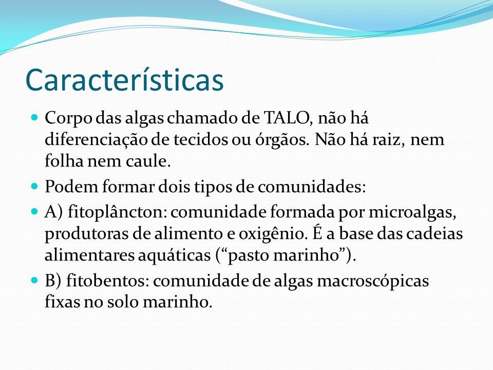 Características Corpo das algas chamado de TALO, não há diferenciação de tecidos ou órgãos. Não há raiz, nem folha nem caule.