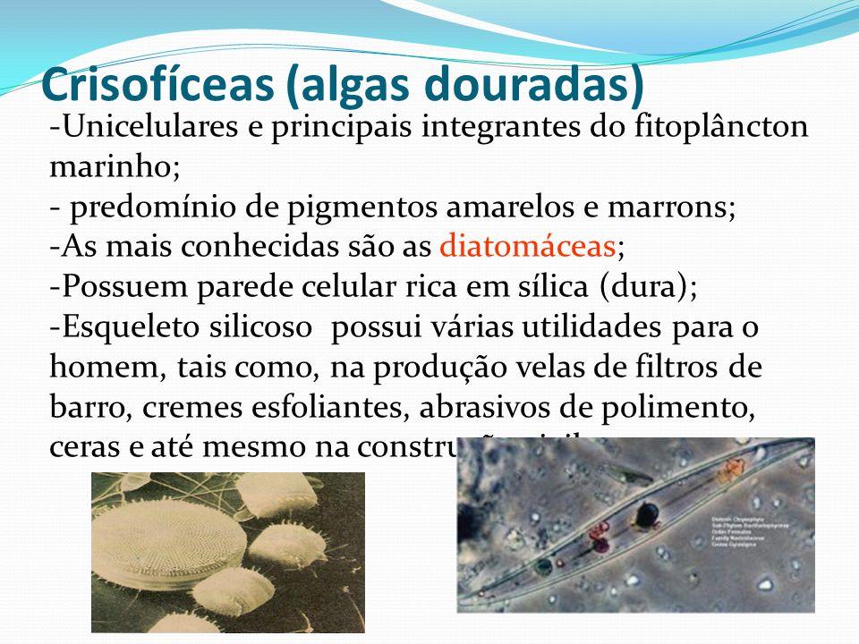 Crisofíceas (algas douradas)