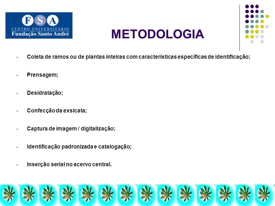 METODOLOGIA Coleta de ramos ou de plantas inteiras com características específicas de identificação;