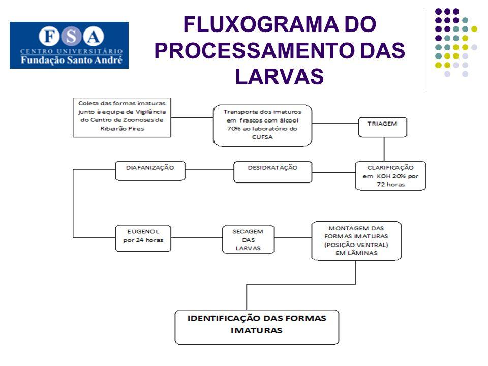 FLUXOGRAMA DO PROCESSAMENTO DAS LARVAS