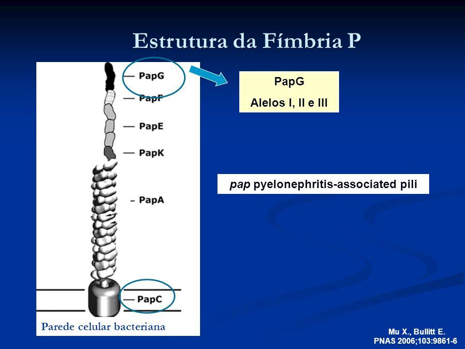 pap pyelonephritis-associated pili