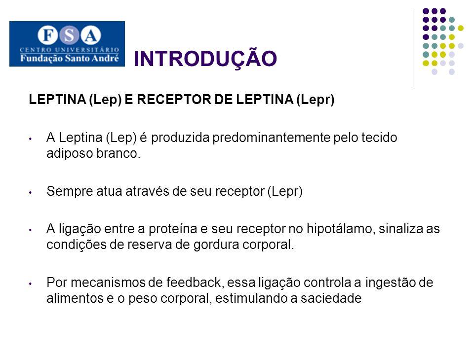 INTRODUÇÃO LEPTINA (Lep) E RECEPTOR DE LEPTINA (Lepr)
