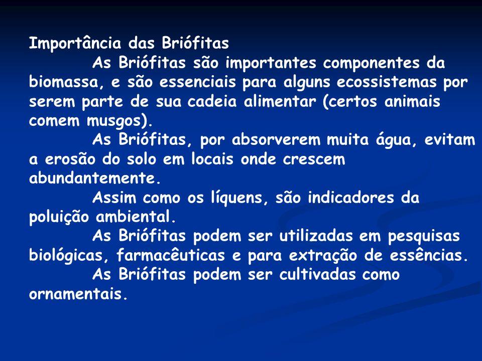Importância das Briófitas