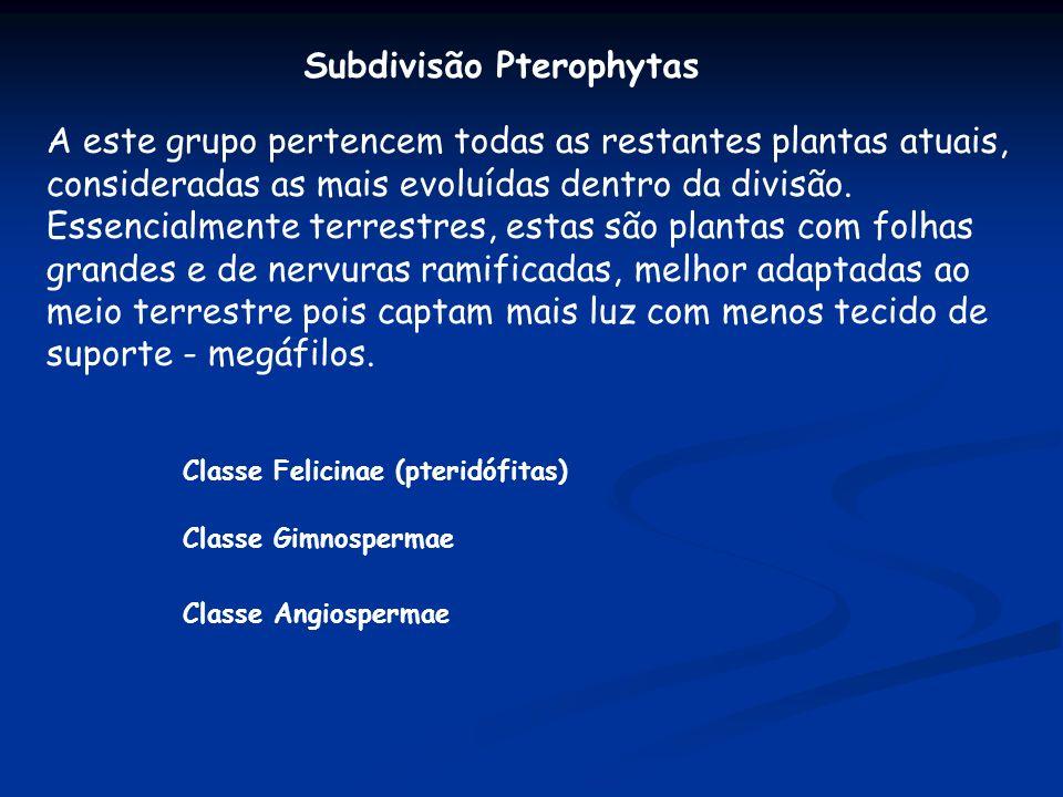 Subdivisão Pterophytas