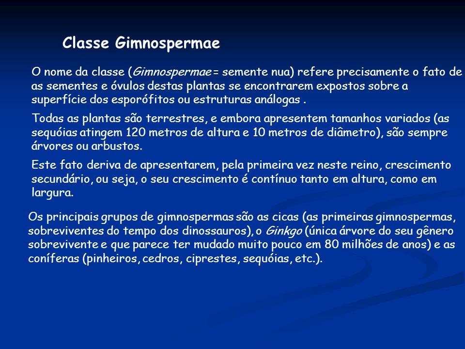 Classe Gimnospermae