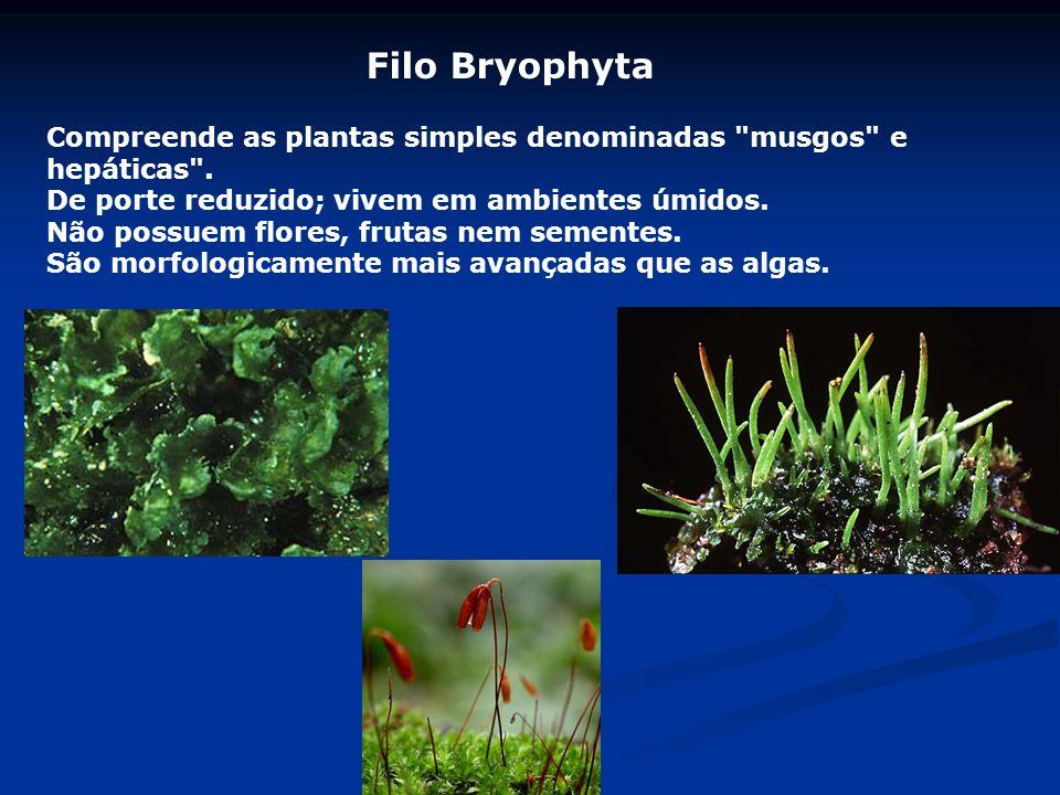 Filo Bryophyta Compreende as plantas simples denominadas musgos e hepáticas . De porte reduzido; vivem em ambientes úmidos.