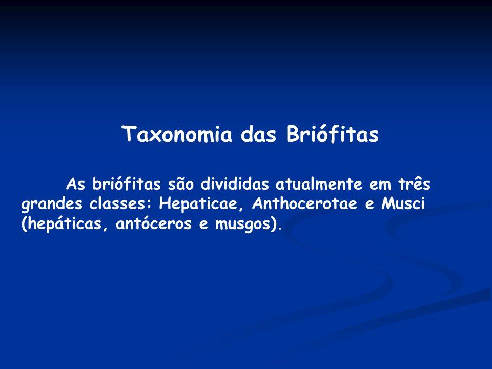Taxonomia das Briófitas