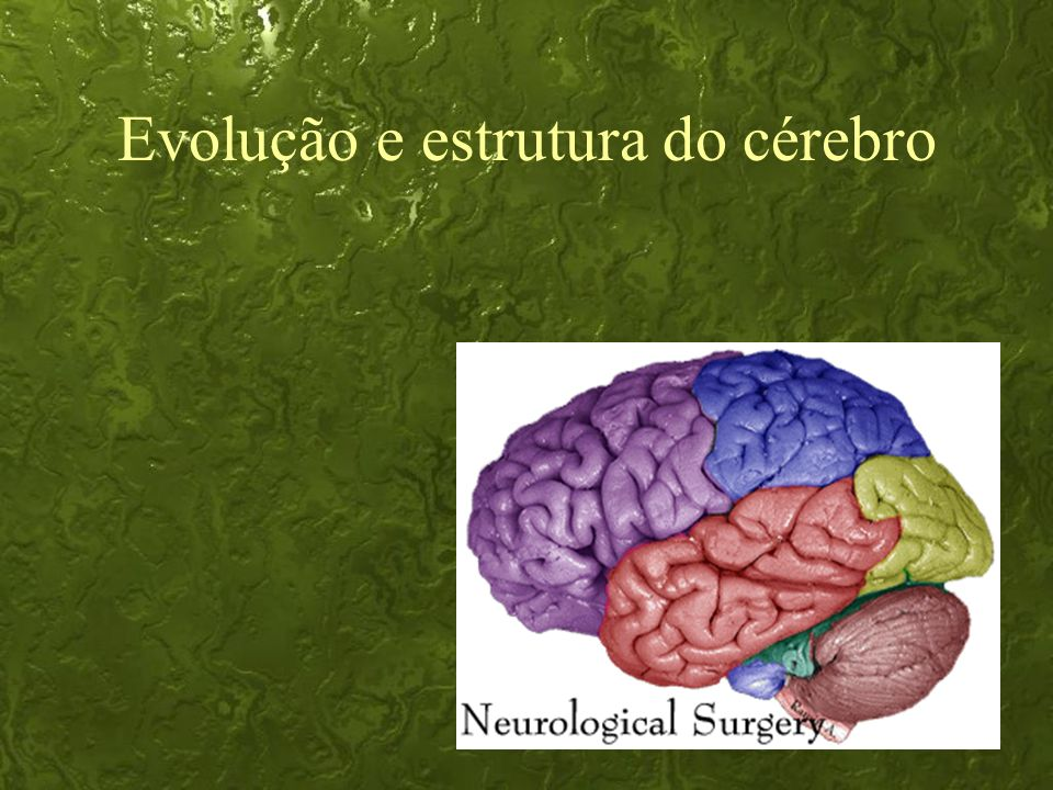 Evolução e estrutura do cérebro