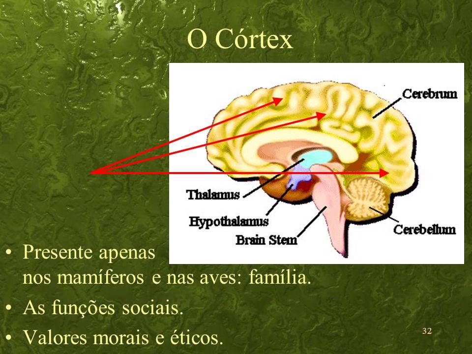 O Córtex Presente apenas nos mamíferos e nas aves: família.