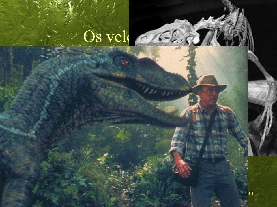 Os velociraptors Bípedes: mãos livres Há evidências de comunicação