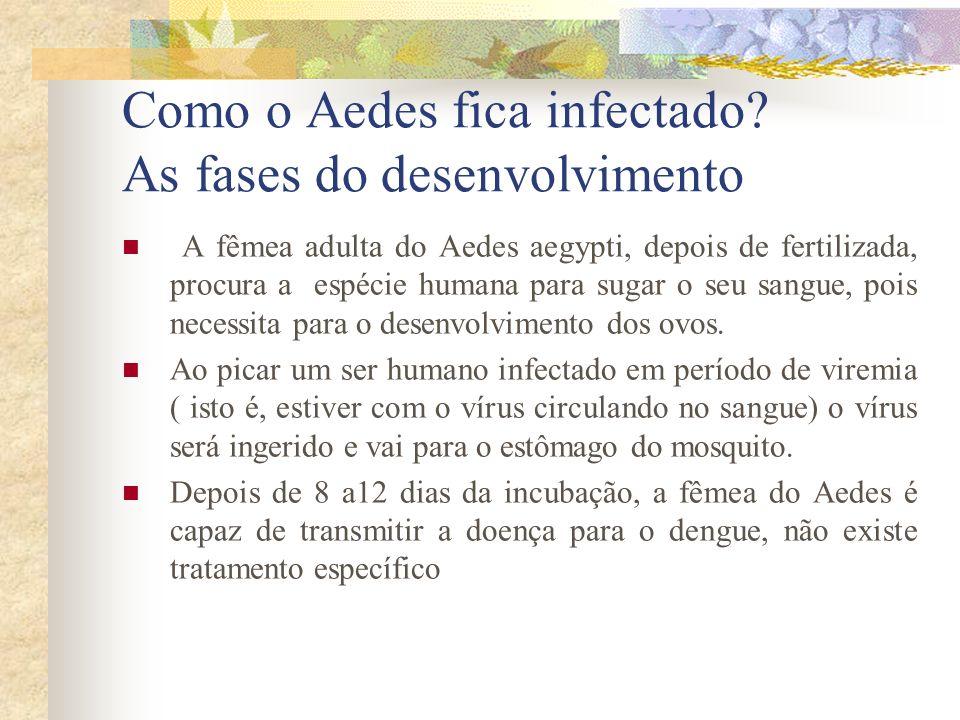 Como o Aedes fica infectado As fases do desenvolvimento