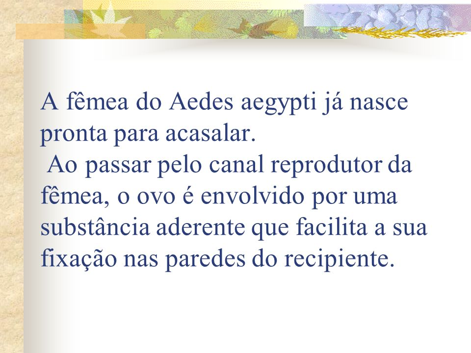 A fêmea do Aedes aegypti já nasce pronta para acasalar