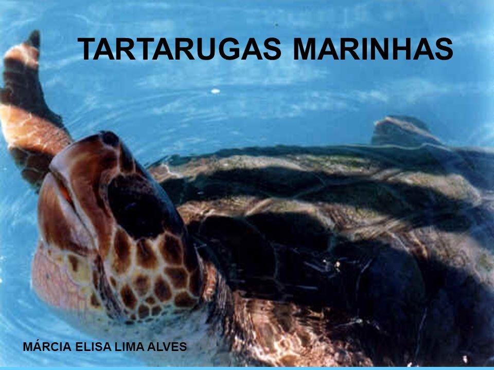 TARTARUGAS MARINHAS MÁRCIA ELISA LIMA ALVES