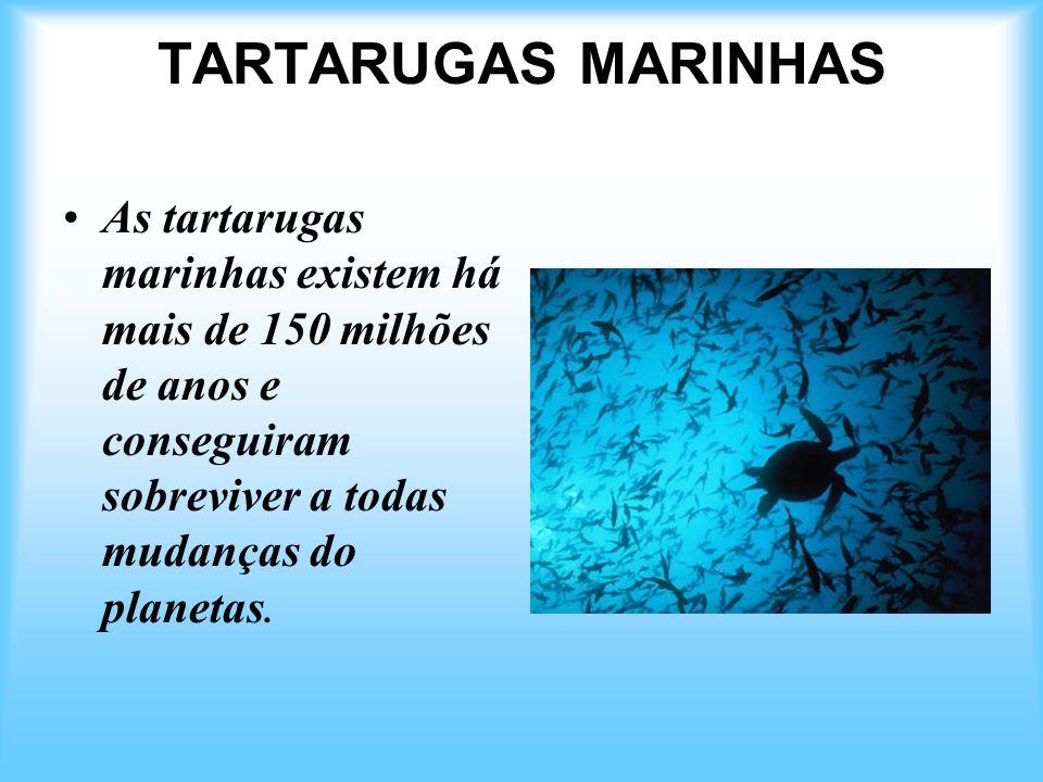 TARTARUGAS MARINHAS As tartarugas marinhas existem há mais de 150 milhões de anos e conseguiram sobreviver a todas mudanças do planetas.