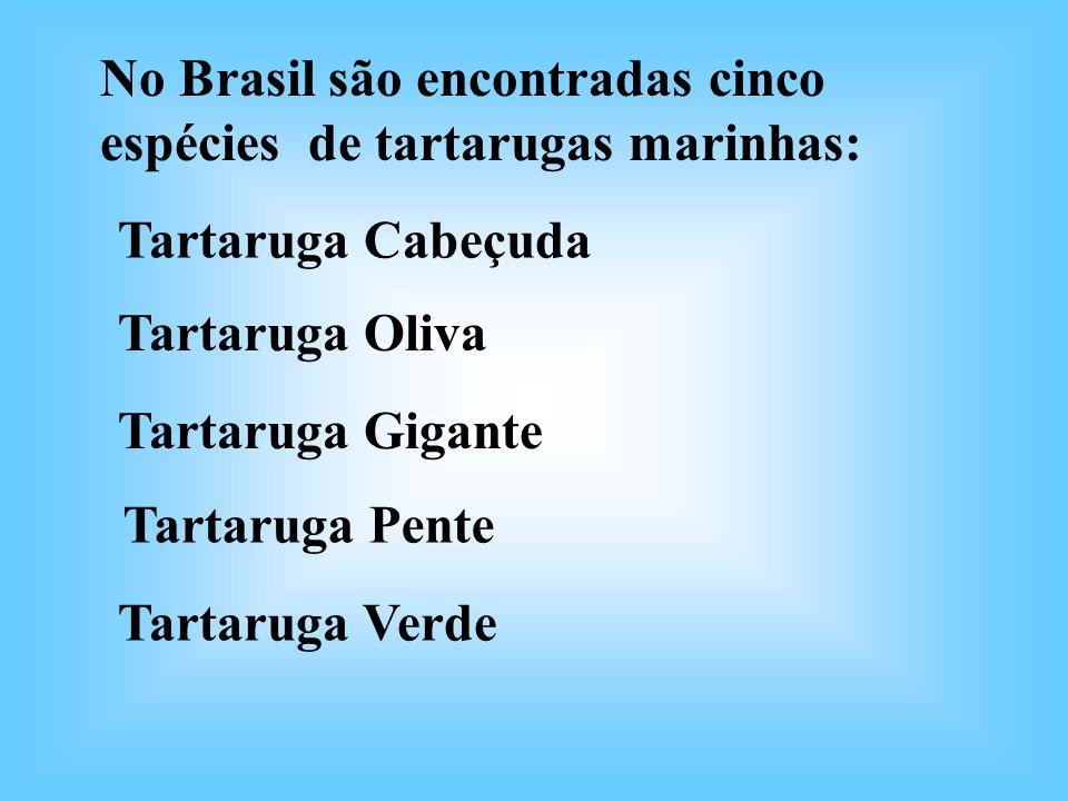No Brasil são encontradas cinco espécies de tartarugas marinhas: