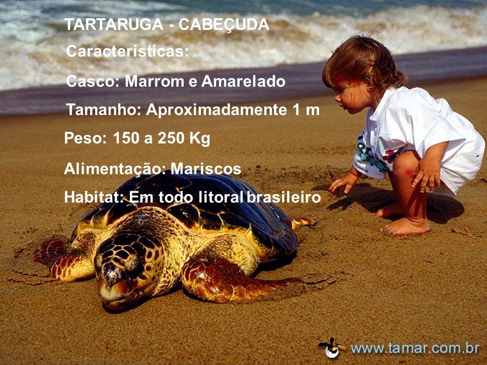 Alimentação: Mariscos Habitat: Em todo litoral brasileiro