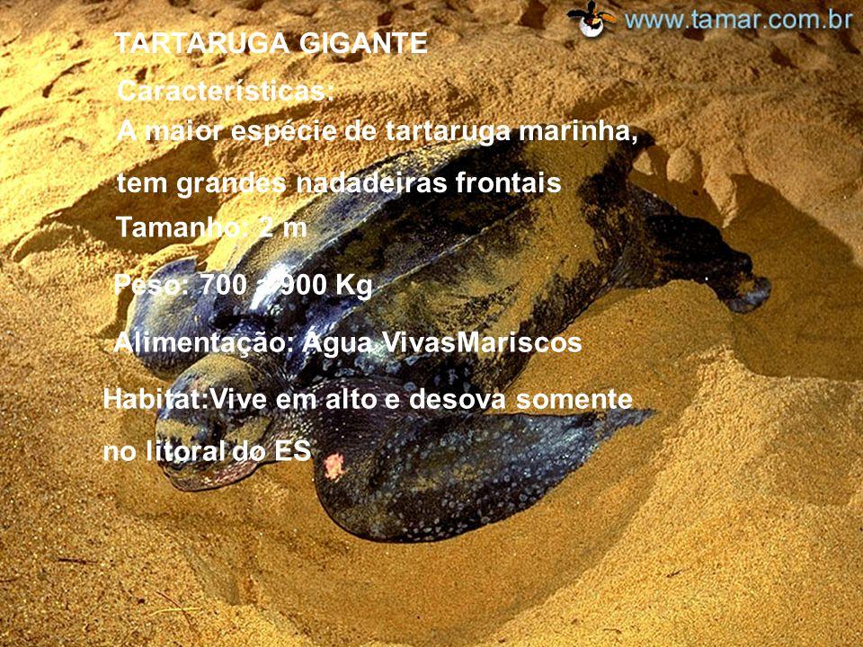 Alimentação: Água VivasMariscos