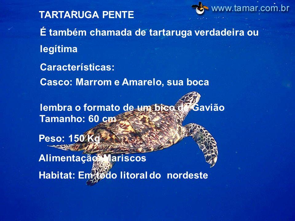 Alimentação: Mariscos Habitat: Em todo litoral do nordeste