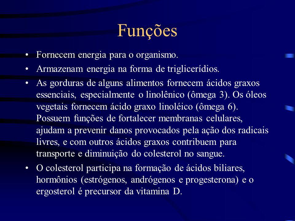Funções Fornecem energia para o organismo.