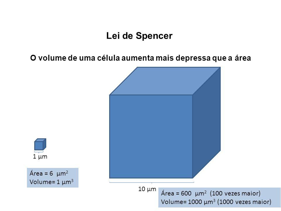 O volume de uma célula aumenta mais depressa que a área
