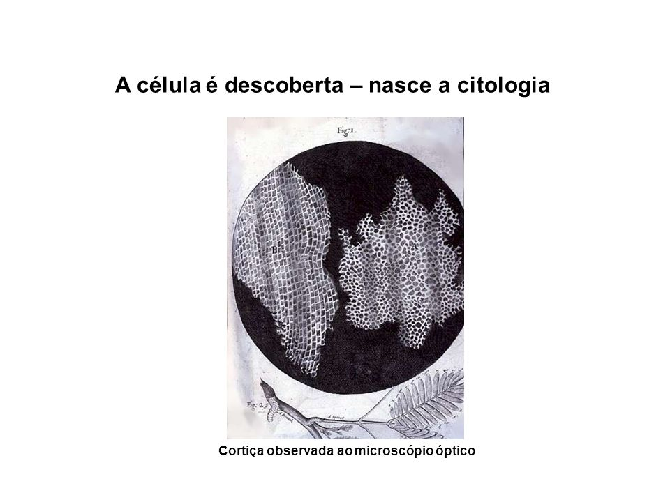 A célula é descoberta – nasce a citologia