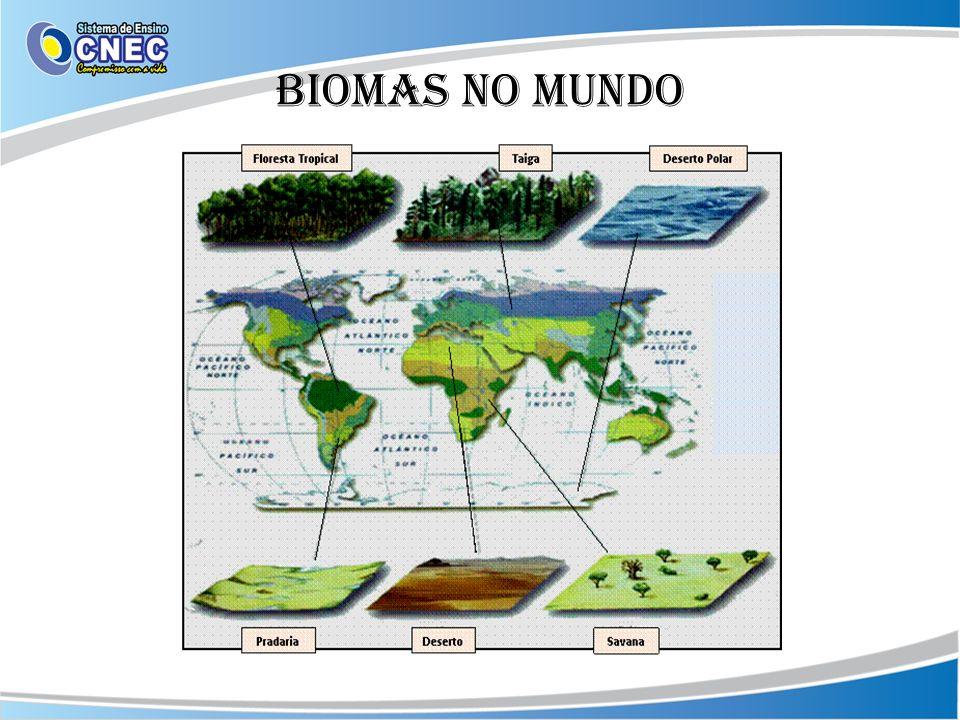 Biomas no mundo