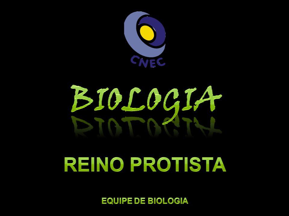 Biologia Reino Protista Equipe de biologia