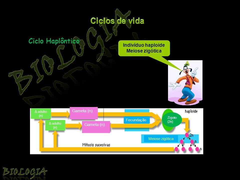 Biologia Biologia Ciclos de vida Ciclo Haplôntico Indivíduo haploide