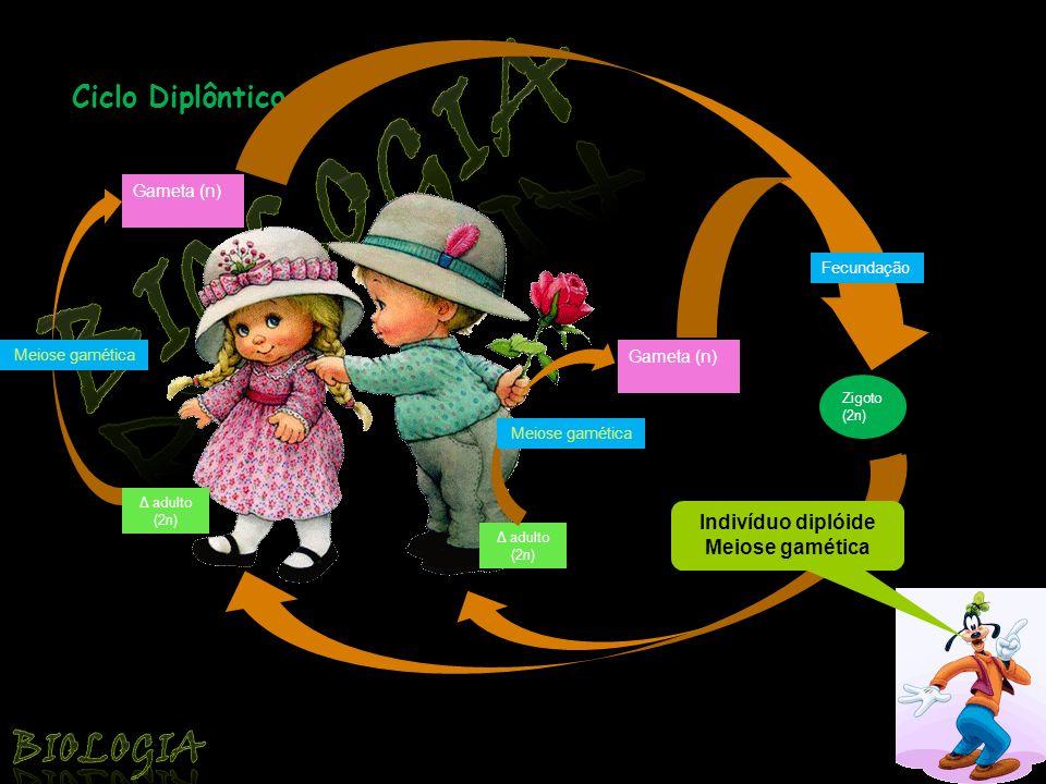 Biologia Biologia Ciclo Diplôntico Indivíduo diplóide Meiose gamética