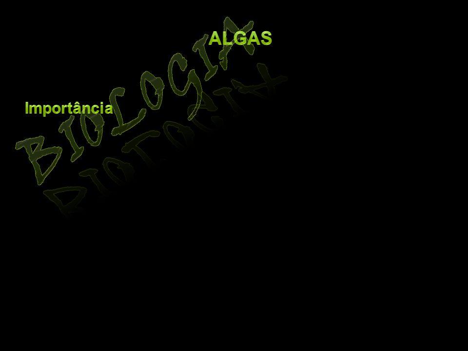 Algas Biologia Importância